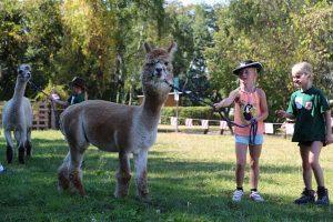 Die beiden Alpakas Diego und Ernesto sorgten für große Kinderaugen. (Foto: Erik Müller)