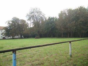 Teil des Geländes welches einem Altenheim und betreuten Wohnen weichen soll (Foto: der uNi)