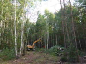 Derzeit wird auf dem ehem. Schießplatz im Pöllwitzer Wald der Bestand des Jungwaldes aufgelichtet. Dadurch sollen sich dort zukünftig wieder Heiden etablieren. (Foto: E. Endtmann NfGA)